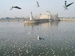 Birds at Lakhota Lake Jamanagar