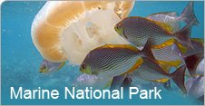 Marine National Park Jamnagar